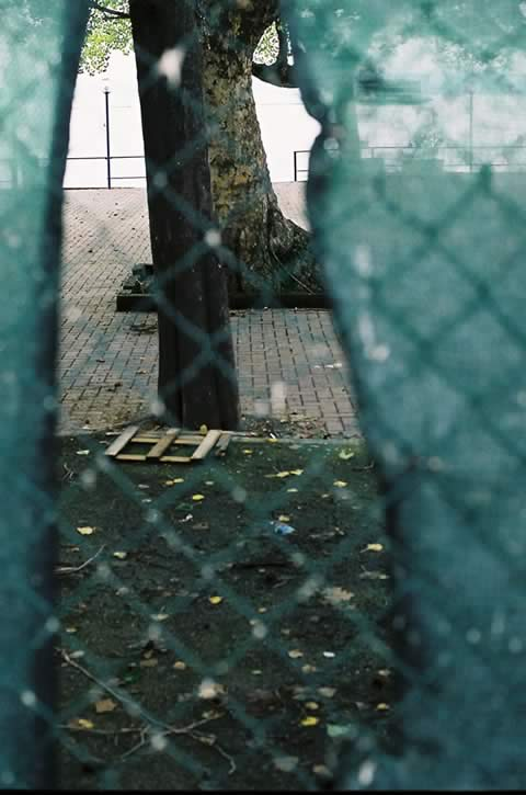 Torri del Benaco 0 | Foto: Benedetta Großrubatscher